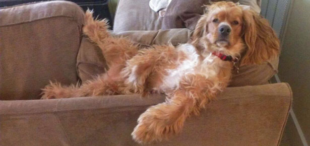 7 Dogs Really Into Just Chillin  Modern Dog magazine