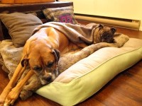 A bed built for a queen (and her king) | Modern Dog magazine
