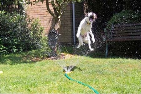 Dogs And Sprinklers Modern Dog Magazine