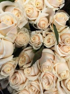 Roses (White)