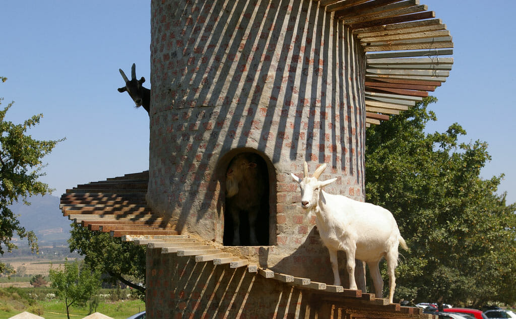 Goat Towers An Idea Whose Time Has Come  Modern Farmer