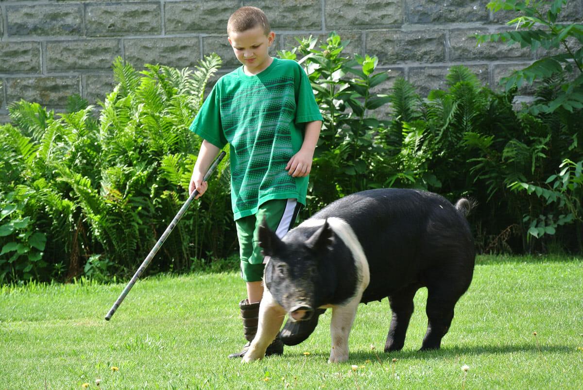 Pretty Pigs The Secrets Of Teenage Swine Groomers