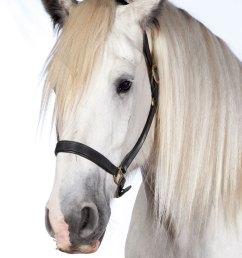 horse brush diagram [ 800 x 1200 Pixel ]