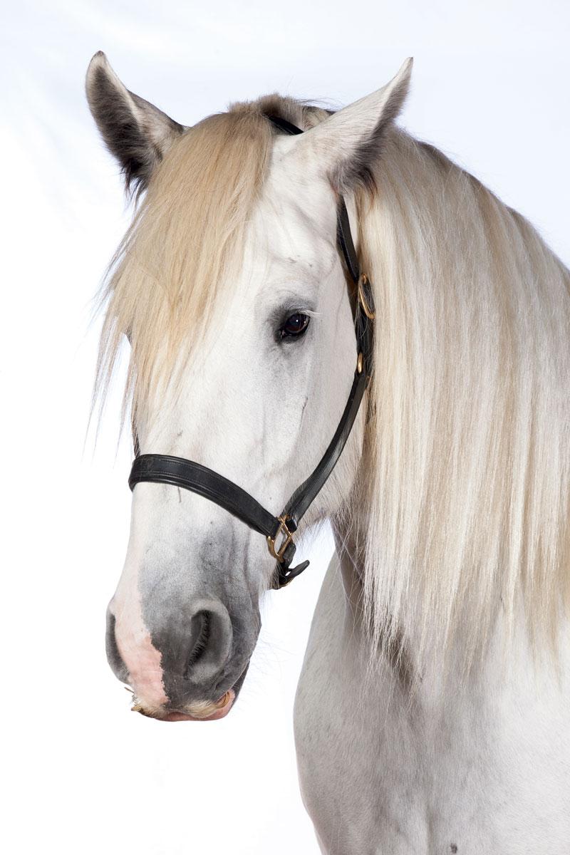 hight resolution of horse brush diagram