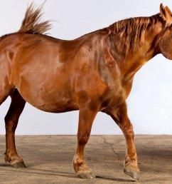 horse brush diagram [ 1200 x 800 Pixel ]