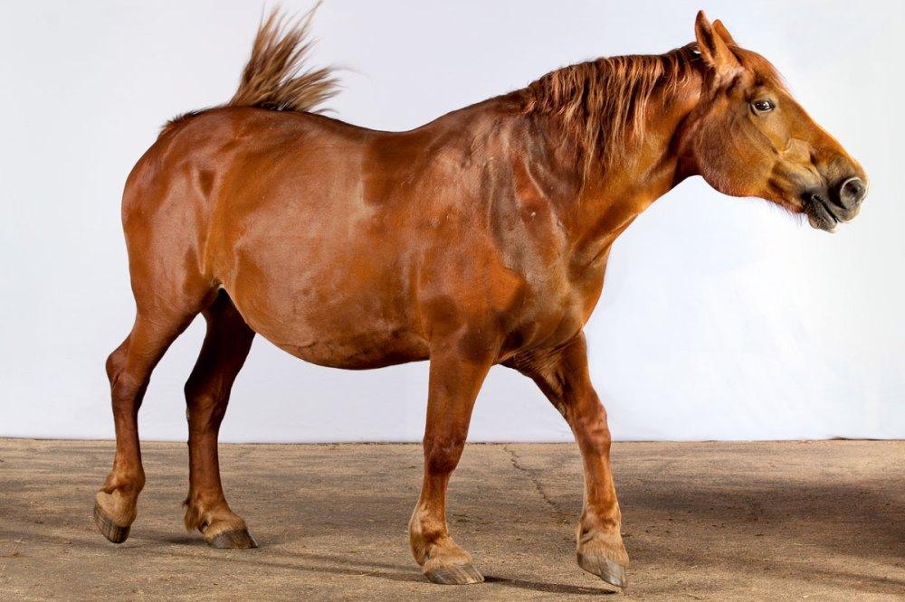 medium resolution of horse brush diagram