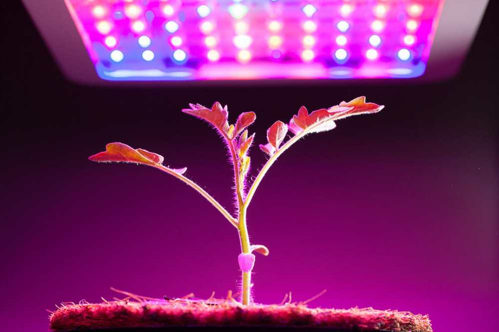medium resolution of understanding the basics of grow lights for indoor plants and indoor gardening