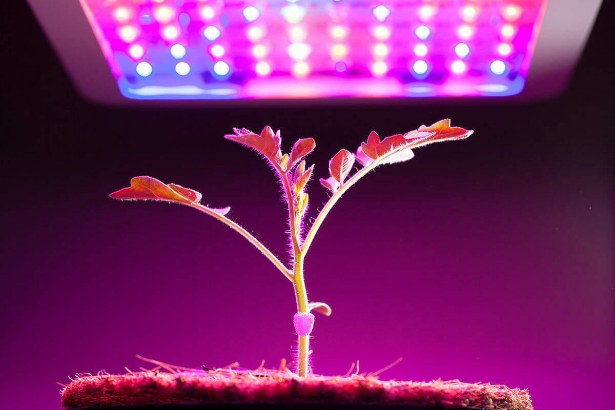 hight resolution of understanding the basics of grow lights for indoor plants and indoor gardening