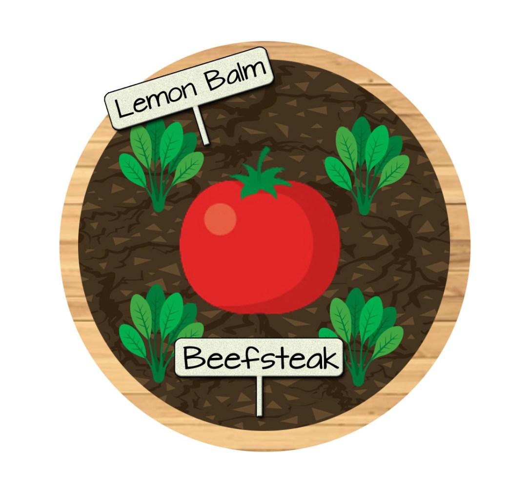 Bucket 1 - Beefsteak Tomatoes and Lemon Balm