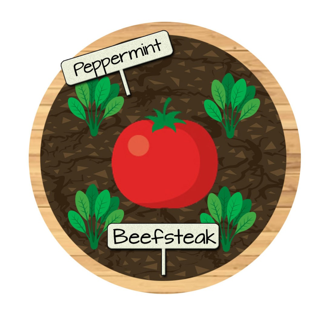 Bucket 2 - Beefsteak Tomatoes and Peppermint
