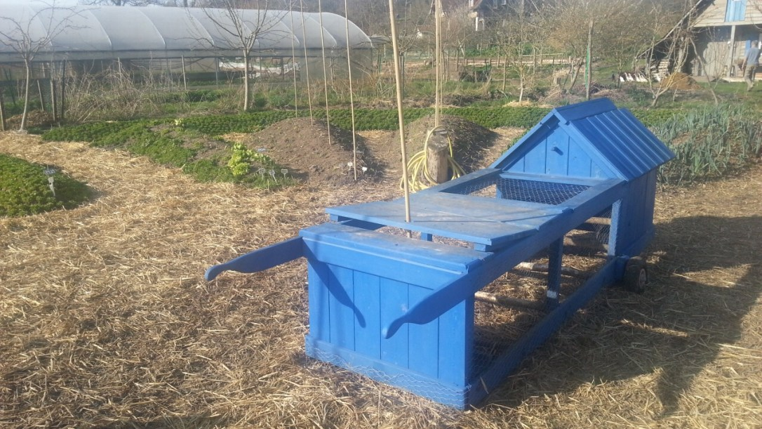 chicken tractor in mandala design garden and greenhouse