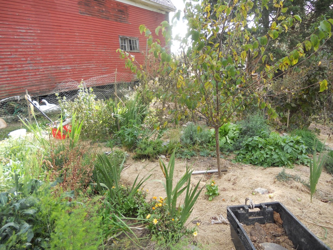 permaculture garden layout food forest apple tree guild