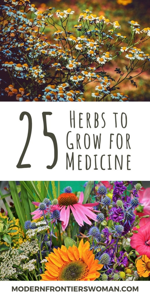 25 Herbs to Grow for Medicine Pin