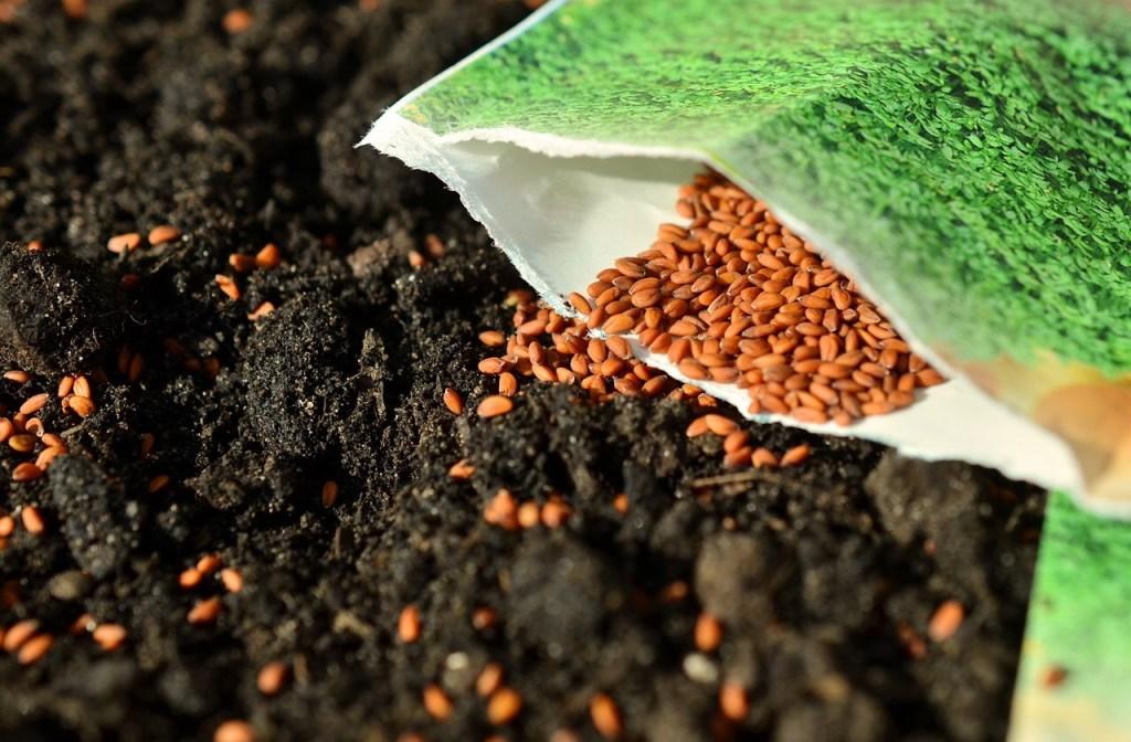 Package of Seeds in Garden