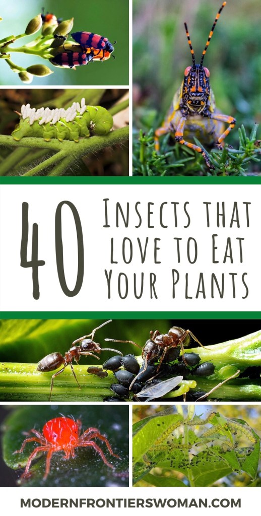 40 Insects that Love to Eat Your Plants