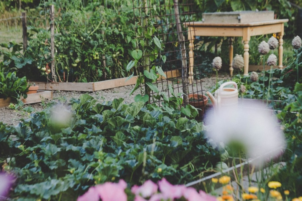 Raised Bed garden with companion planting