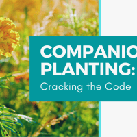 Companion Planting: Cracking the Code