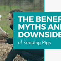 The Benefits, Myths and Downside of Keeping Pigs