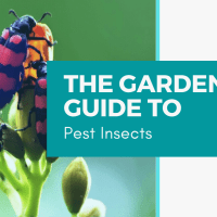 The Gardener's Guide to Pest Insects