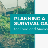 Planning a Survival Garden for Food and Medicine