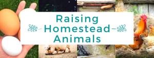 Raising Homestead Animals