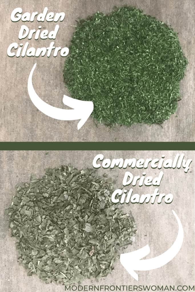 Garden vs commercially Dried Cilantro