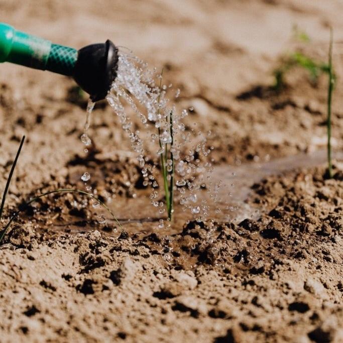 water runoff seedling