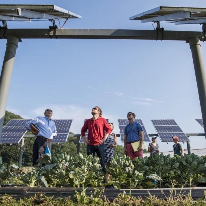 vegetables growing under solar panels