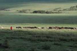 Tanzania, Massaikrigare2008.