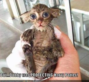 Dobby-protecting-Harry-Potter
