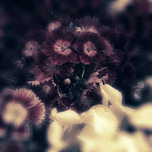 flowers_fantasy_noir_pudding_camera