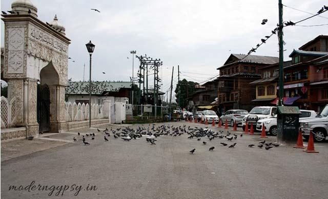 Hazratbal main gate pigeons