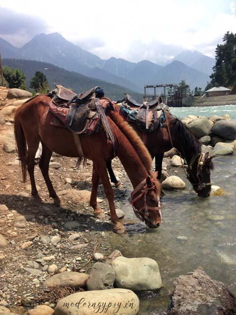 Horses-drinking-water-Lidder-river-Pahalgam-Kashmir-Diaries