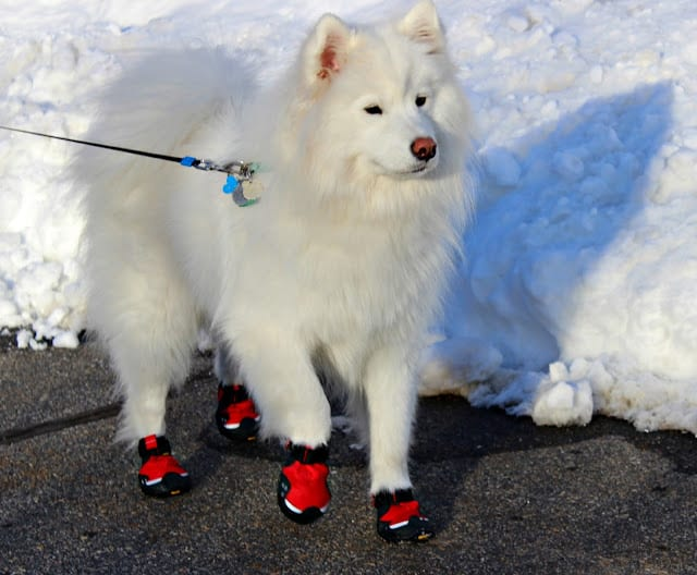 Ruff Wear Booties