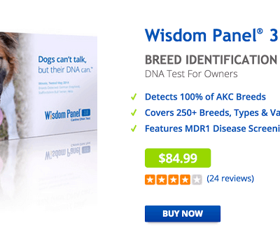 Wisdom Panel 3.0: DNA Testing for Pups!