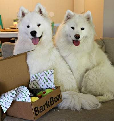 Tink and Meek BarkBox
