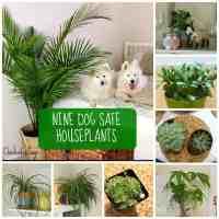 Non Toxic Houseplants For Pets