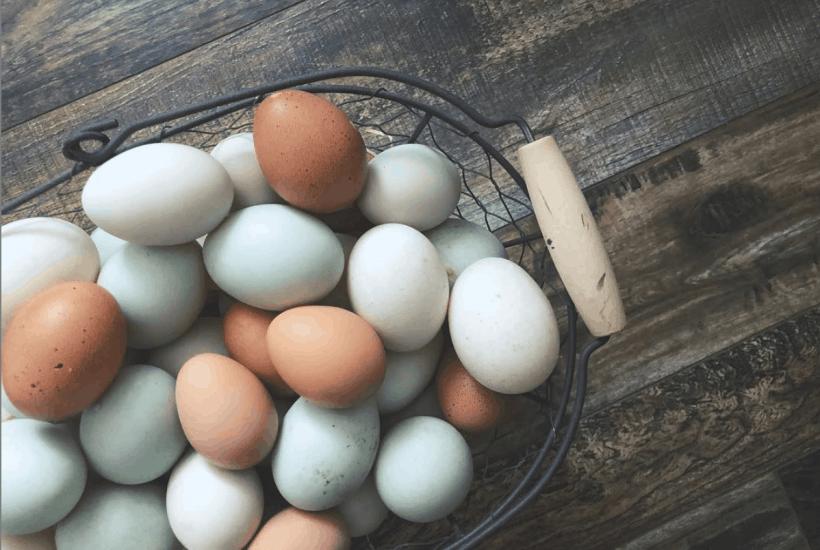 sustainable backyard chickens