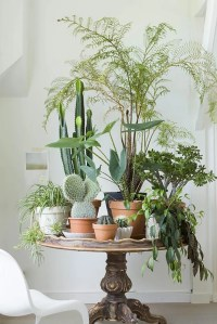 10 HAPPY LIVING ROOM IDEAS WITH PLANTS | Modern Home Decor