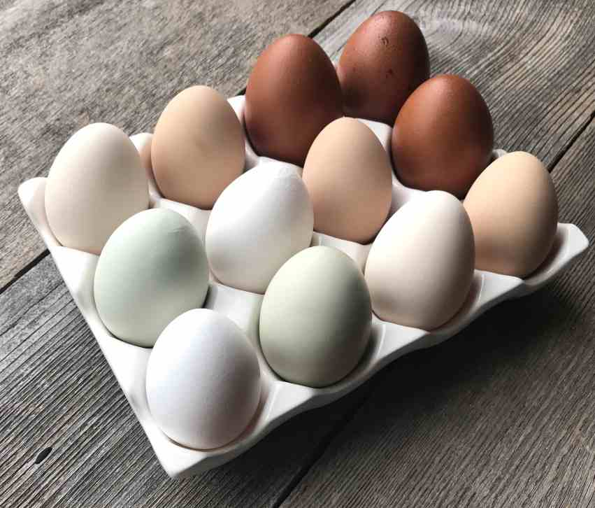 5 Reasons Your Hens Aren't Laying Eggs