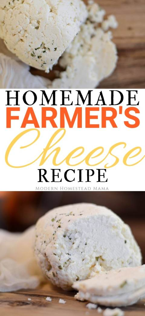 Homemade Farmer's Cheese Recipe   Modern Homestead Mama