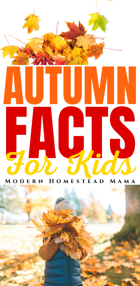 Fun & Interesting Autumn Facts for Kids | Modern Homestead Mama