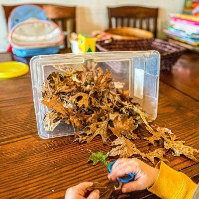 Leaf Cutting Bin for Preschoolers