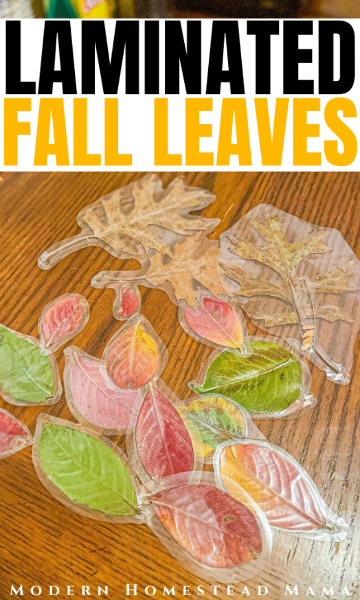 Laminated Fall Leaves Craft | Modern Homestead Mama