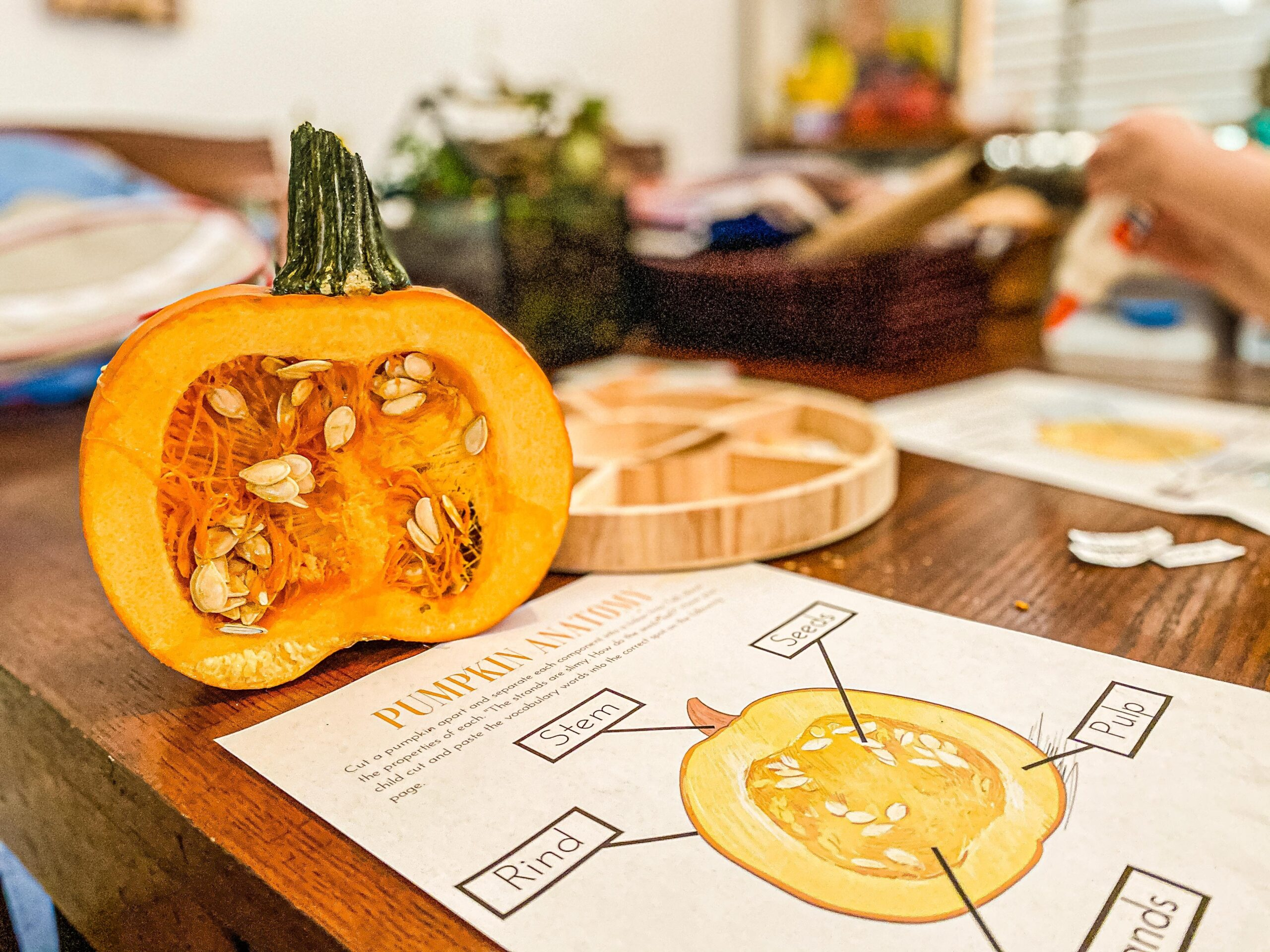 Anatomy of a Pumpkin Science Study for Preschoolers