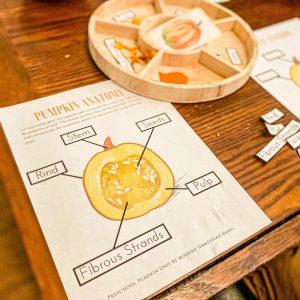 Anatomy of a Pumpkin Science Study for Preschoolers