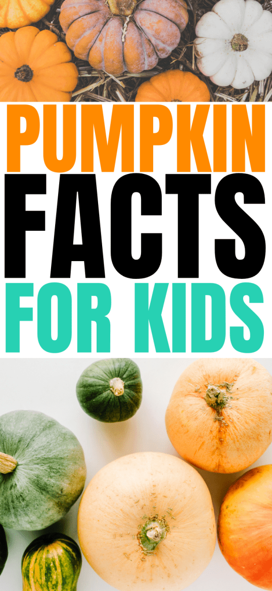 Pumpkin Facts for Kids | Modern Homestead Mama