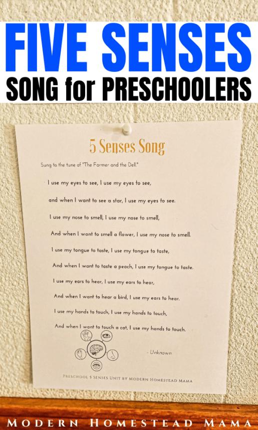 Five Senses Song for Preschoolers | Modern Homestead Mama