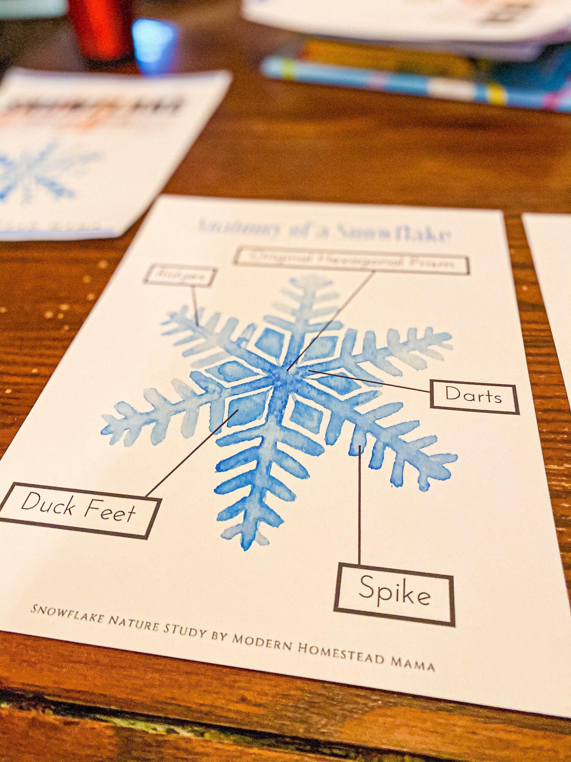 Anatomy of a Snowflake Worksheet