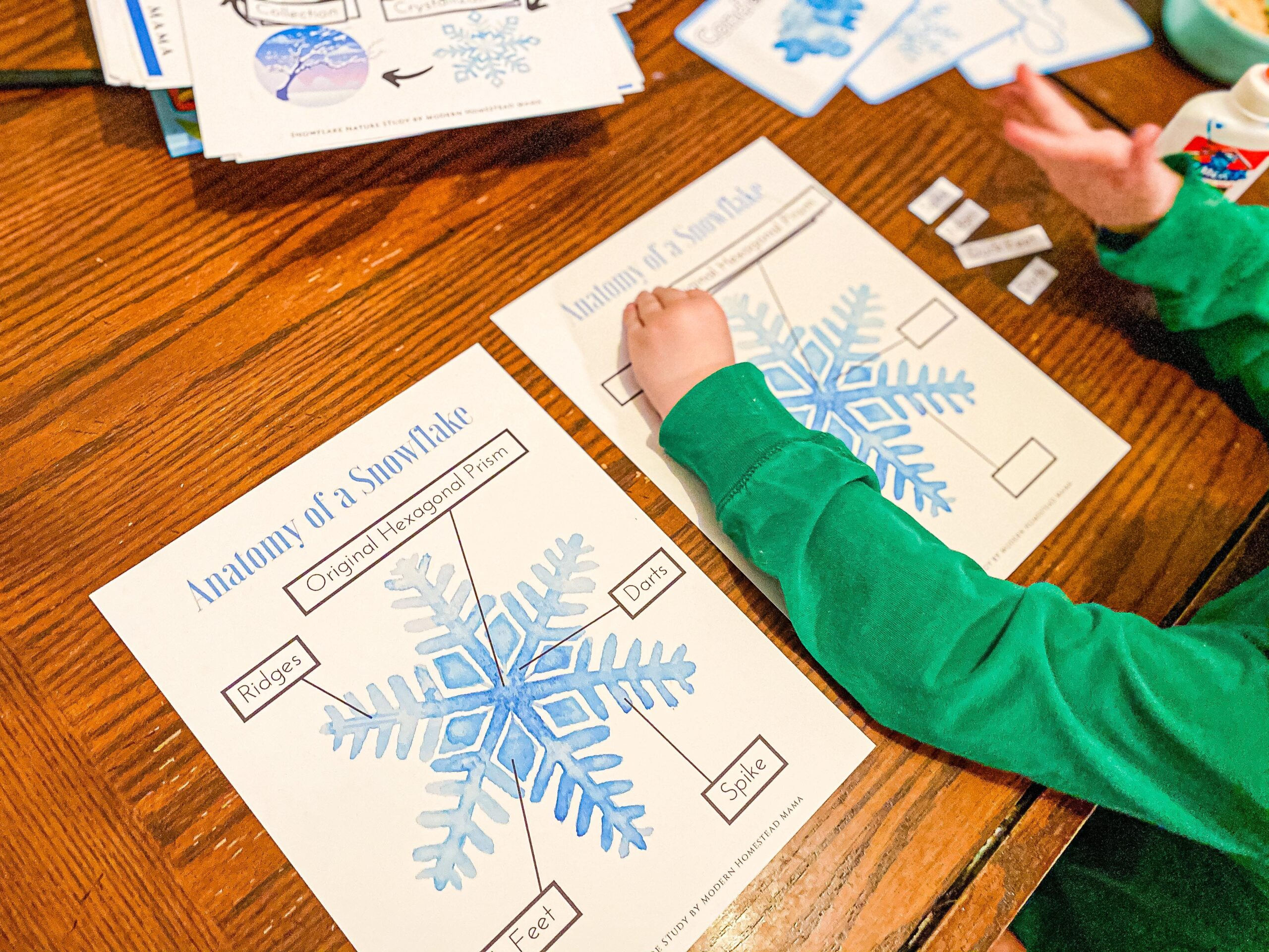 Anatomy of a Snowflake Worksheet